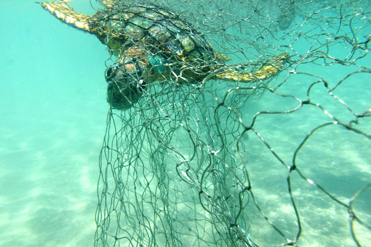 It is estimated between 4,000-10,000 turtles were entangled in nets over the last decade. Image: Erub Arts.