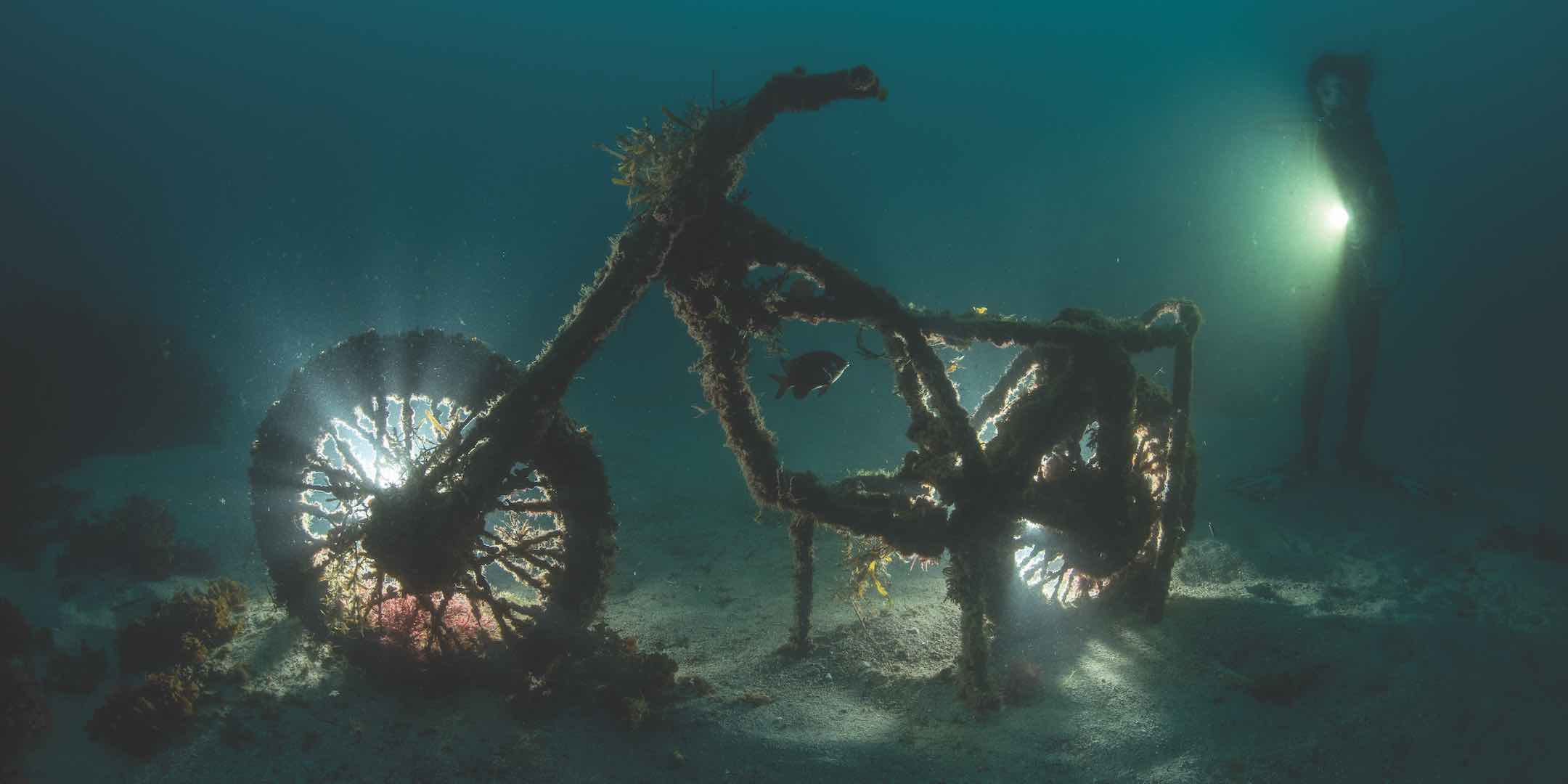 A discarded motorbike transforms from trash to treasure by creating habitat for small fish and invertebrate growth in the Cabbage Tree Bay Aquatic Reserve off Manly