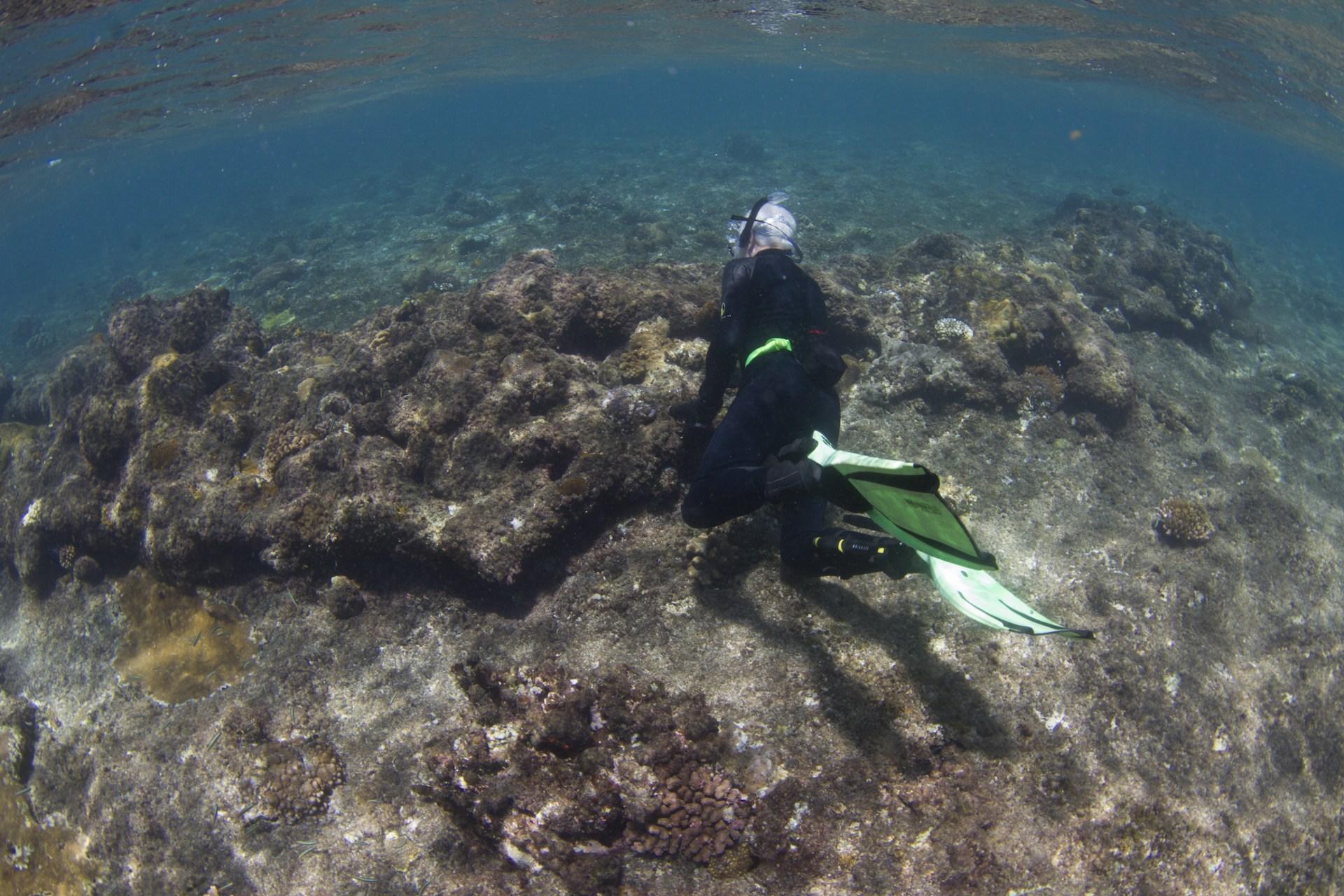 Ferguson Reef archaeology expedition – 25 November