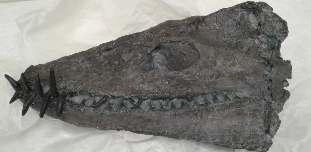 Cast of a New Zealand Plesiosaur skull