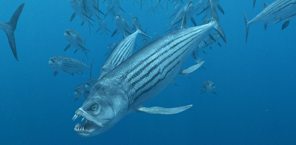 A group of Xiphactinus, the largest bony fish of the Late Cretaceous era, peruses the ocean in search of food. Xiphactinus were able to swallow prey up to half their length. From Sea Monsters 3D film ©2007 NGHT Inc.